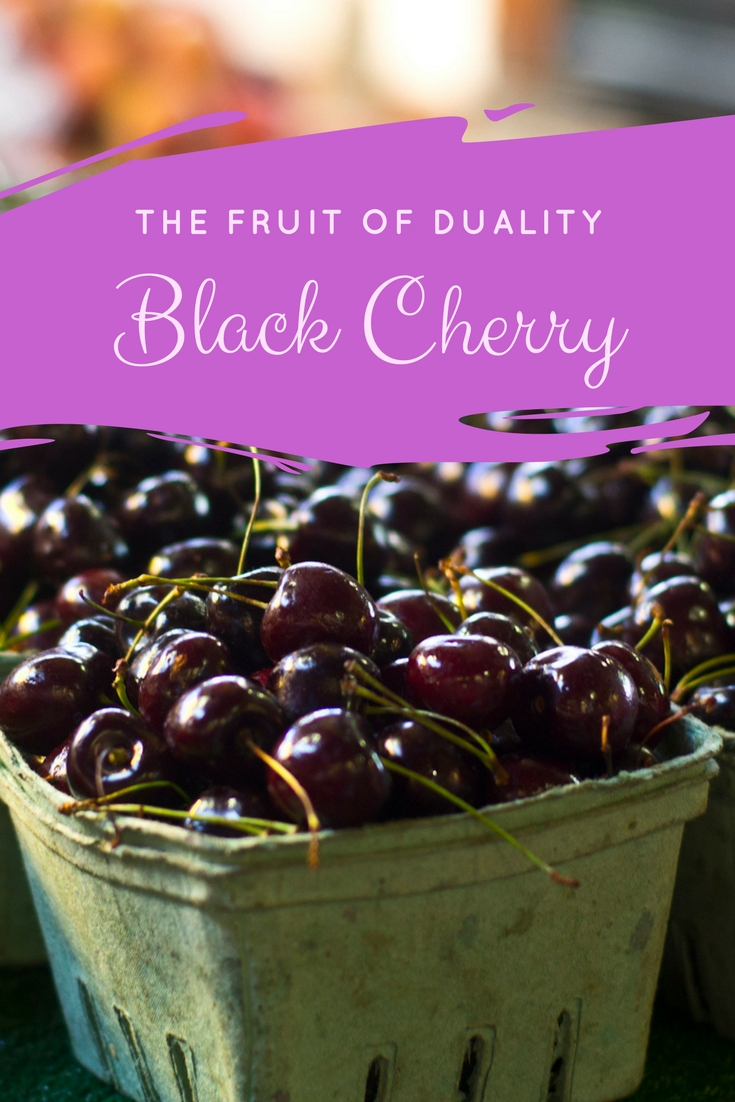 Black Cherry Magical Properties and Uses - Magical Herbs