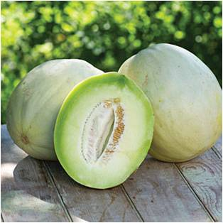 Honeydew Melon - Magical Herbs Honeydew Melon - Elune Blue (Featured Image)
