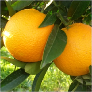 The Magick of Orange: The Happiness Fruit -- Orange Magical Properties and Uses