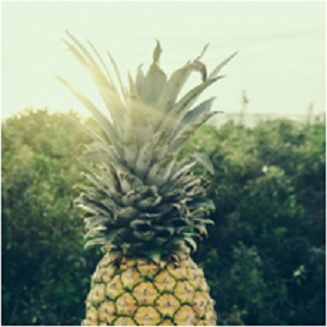 The Traveler's Fruit: Pineapple Meaning and Uses