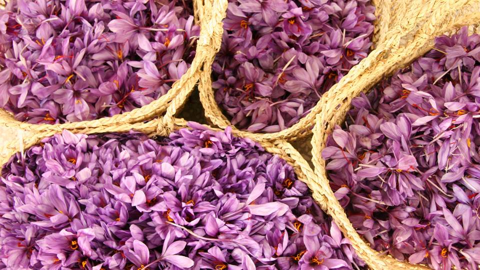 To relieve herself of her new found burden, Smilax turned Crocus into a saffron crocus flower.  The orange stigmas to this day have come to symbolize the warm yet yearning glow of undying and unrequited love. -- Saffron Magical Properties and Uses