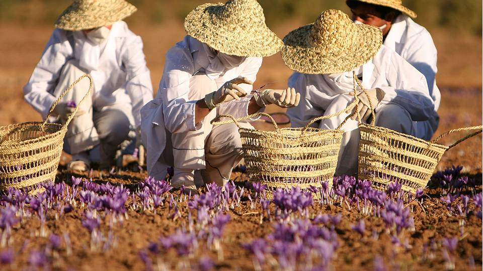 "The Persians would use saffron to ""raise the wind,"" as wind power was quite important to Persian culture and was used to moderate the temperature in their homes and storehouses. -- Saffron Magical Properties and Uses"