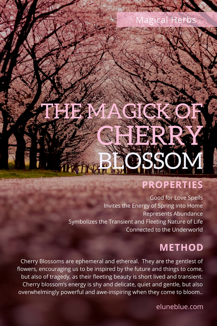 The Magic of Cherry Blossoms