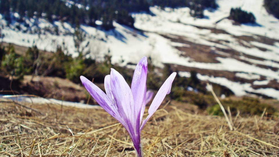 In Ancient Greek mythology, sailors would make the long, arduous journey to the island of Cilicia just to gather the world's most prized saffron for promises of riches and fortune. -- Saffron Magical Properties and Uses