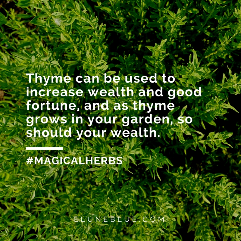 The Knight's Herb: Thyme Magical Properties and Uses