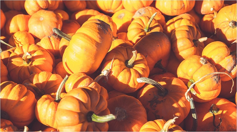 All Hallow's Gourd: Pumpkin Magical Properties and Uses — Magical Herbs
